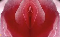 Интимная пластика, контурная пластика интимных зон у женщин, фото до и после